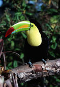 Take a look at these toucans